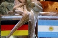 Новый Пауль спрогнозировал победу Германии в финале ЧМ 2014